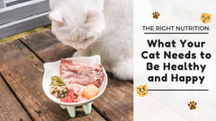 The Right Nutrition: What Your Cat Needs to Be Healthy and Happy