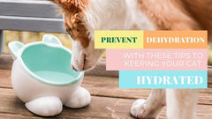 Prevent Dehydration with These Tips to Keeping Your Cat Hydrated