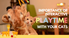 Importance of Interactive playtime with your cats