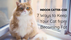 7 ways to keep your cat from becoming fat