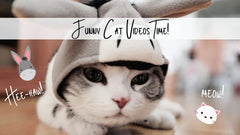 Funny Cat Videos