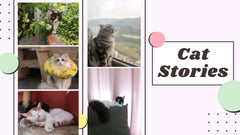 Share your cat stories