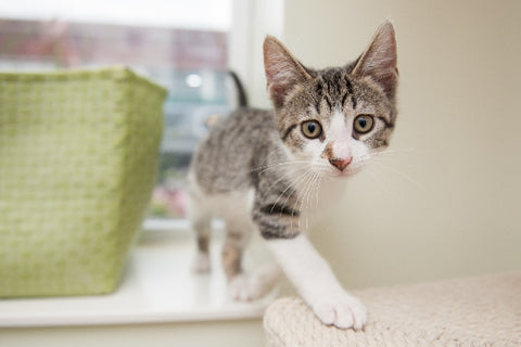 Tips on How to Adopt or Foster a Cat