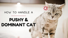 ViviPet | How to Handle a Pushy and Dominant Cat