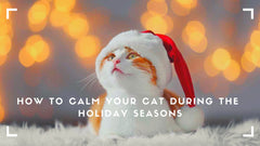 How to clam your cat during the holiday seasons