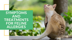 symptoms and treatments for feline allergies