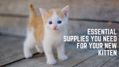 essential supplies your need for your new kitten