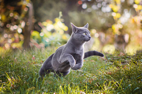 What to Do When Your Cat Runs Away (2)