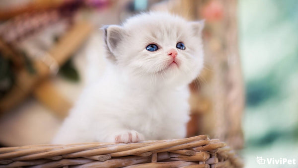 When Do Kitten Lose Their Baby Teeth and More?