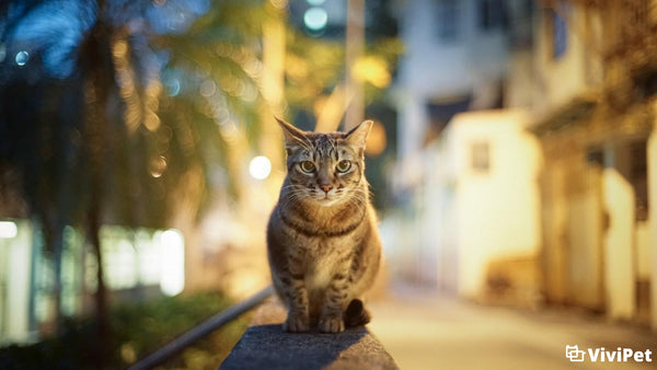 Why Your Cat Meows in the Middle of the Night