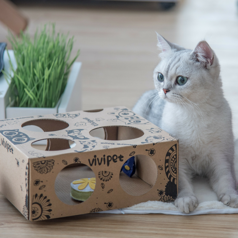 ViviPet Designed | Stay Fit Cat Toy Box - VIVIPET