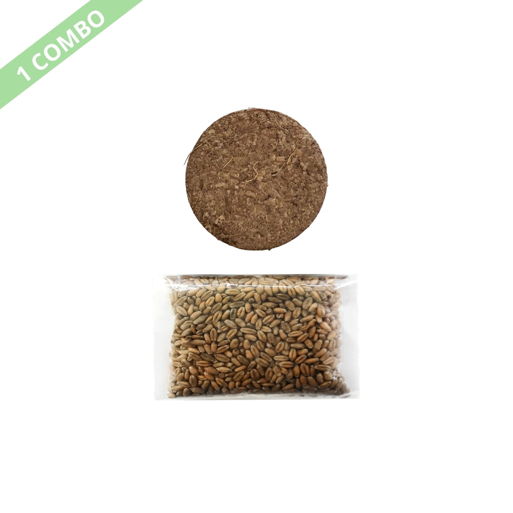 ViviCat Selected | Cat Grass Seeds Combo