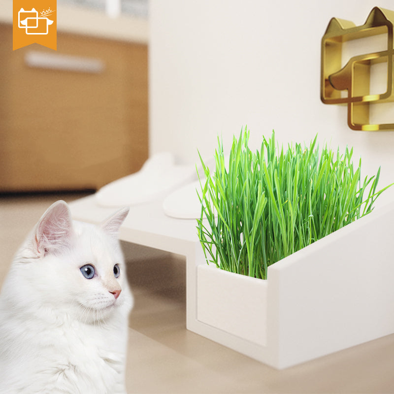 Wheatgrass Water Beads Combo | Pet Accessories | ViviPet