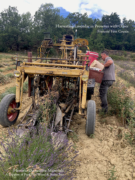 Summers in Provence Harvesting Lavender