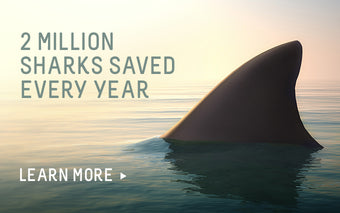2 million sharks saved every year. Learn more.