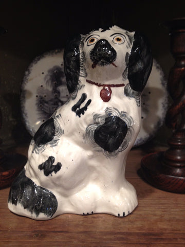 Staffordshire Black and White Spaniel
