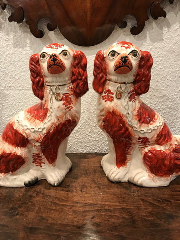 English Staffordshire Red and White Spaniels