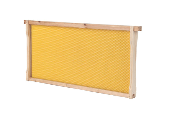 Deep Bee Hive Frame And Foundation (12-Pack)