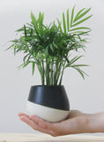 THELMA - Ceramic planter in white with black matte glaze