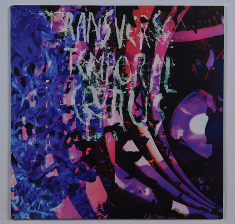 Animal Collective | Transverse Temporal Gyrus