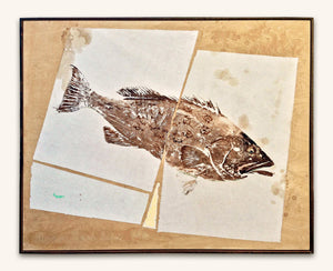 New Fish Art - Gag Grouper