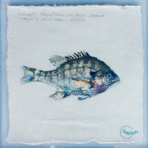 New Fish Art - bluegill