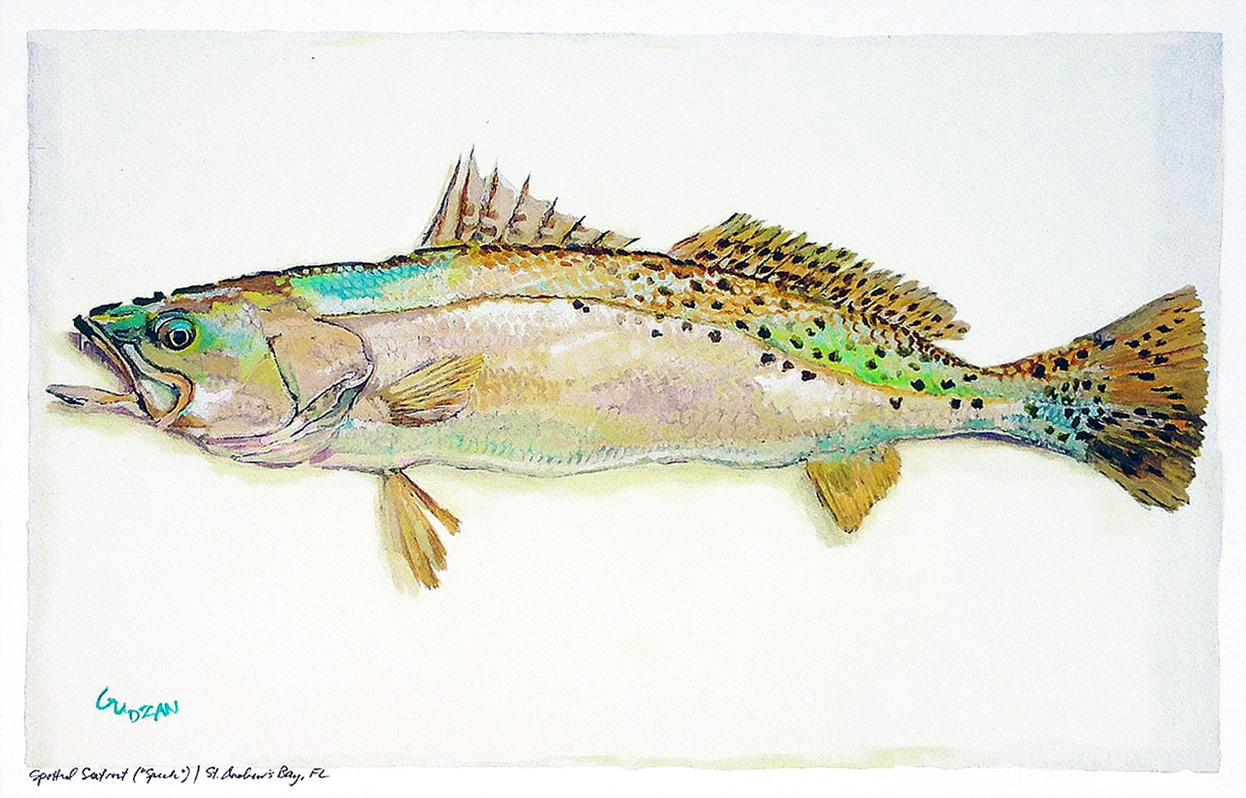 New Fish Art - Speckled Trout and Redfish