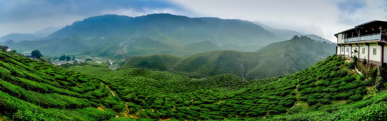 Trace your Tea back to the Tea Garden - Tea Campaign Australia - Organic Darjeeling Tea