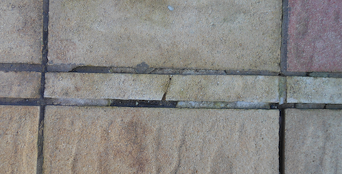Algae grows in poor grouting between concrete slabs on patios