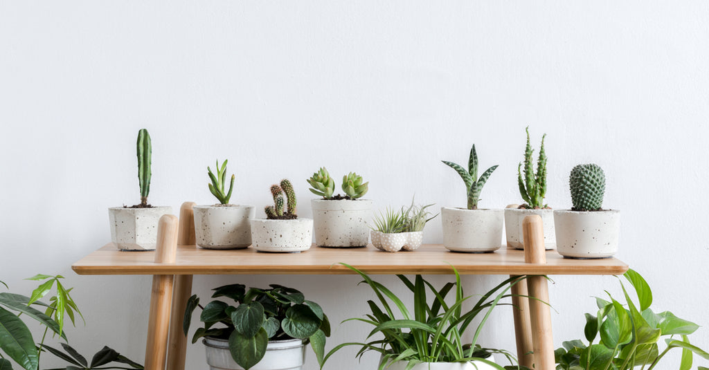 Hang out with Indoor House Plants