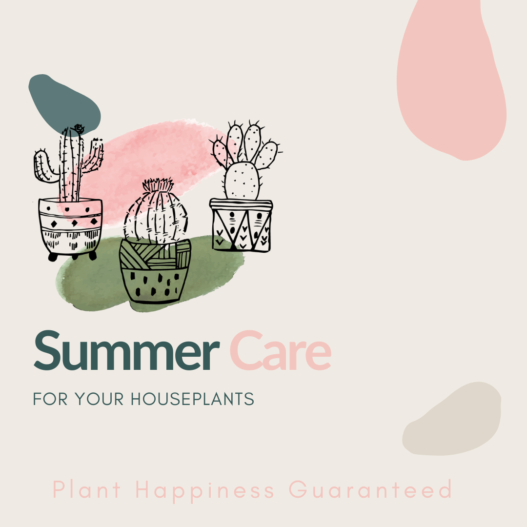 Summer Care Guide for Houseplants