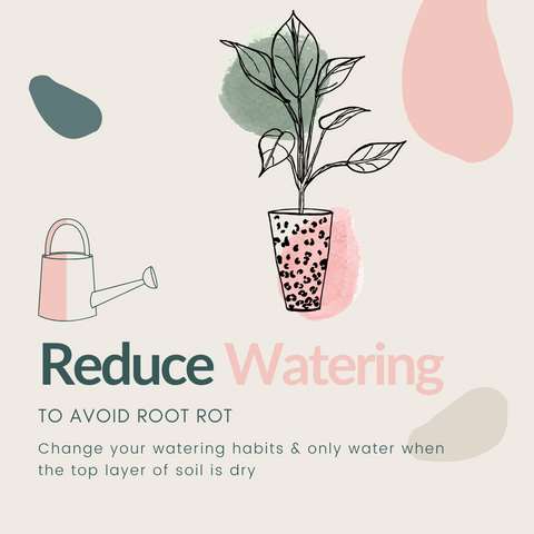 Houseplant Winter Care Guide