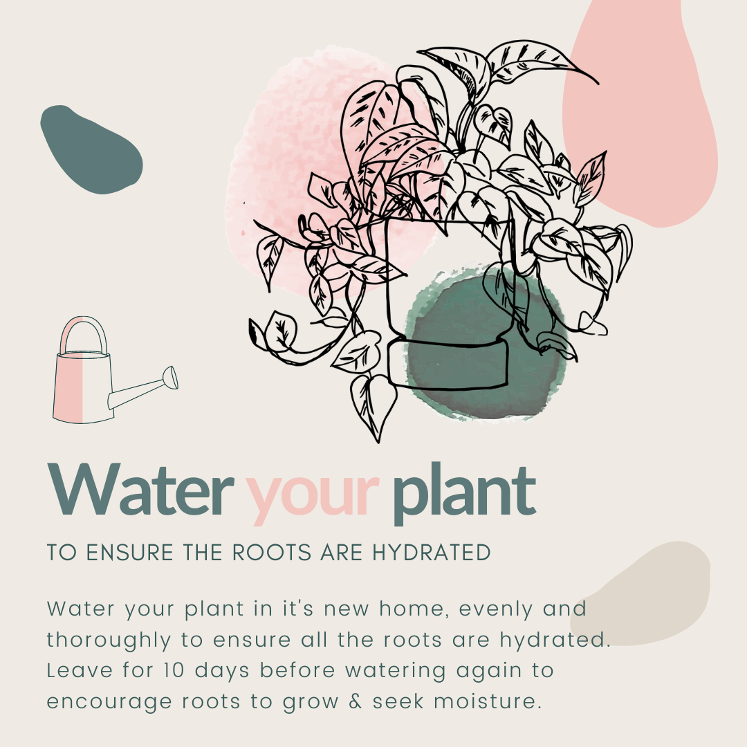 How to repot your houseplant