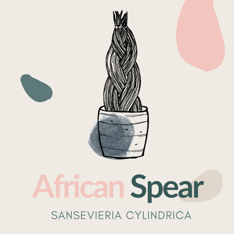 African Spear Plant