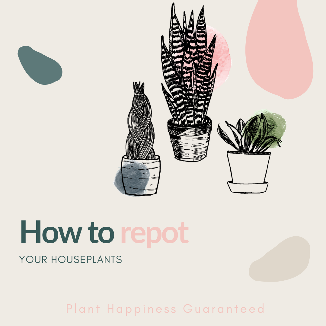 How to re pot your houseplants