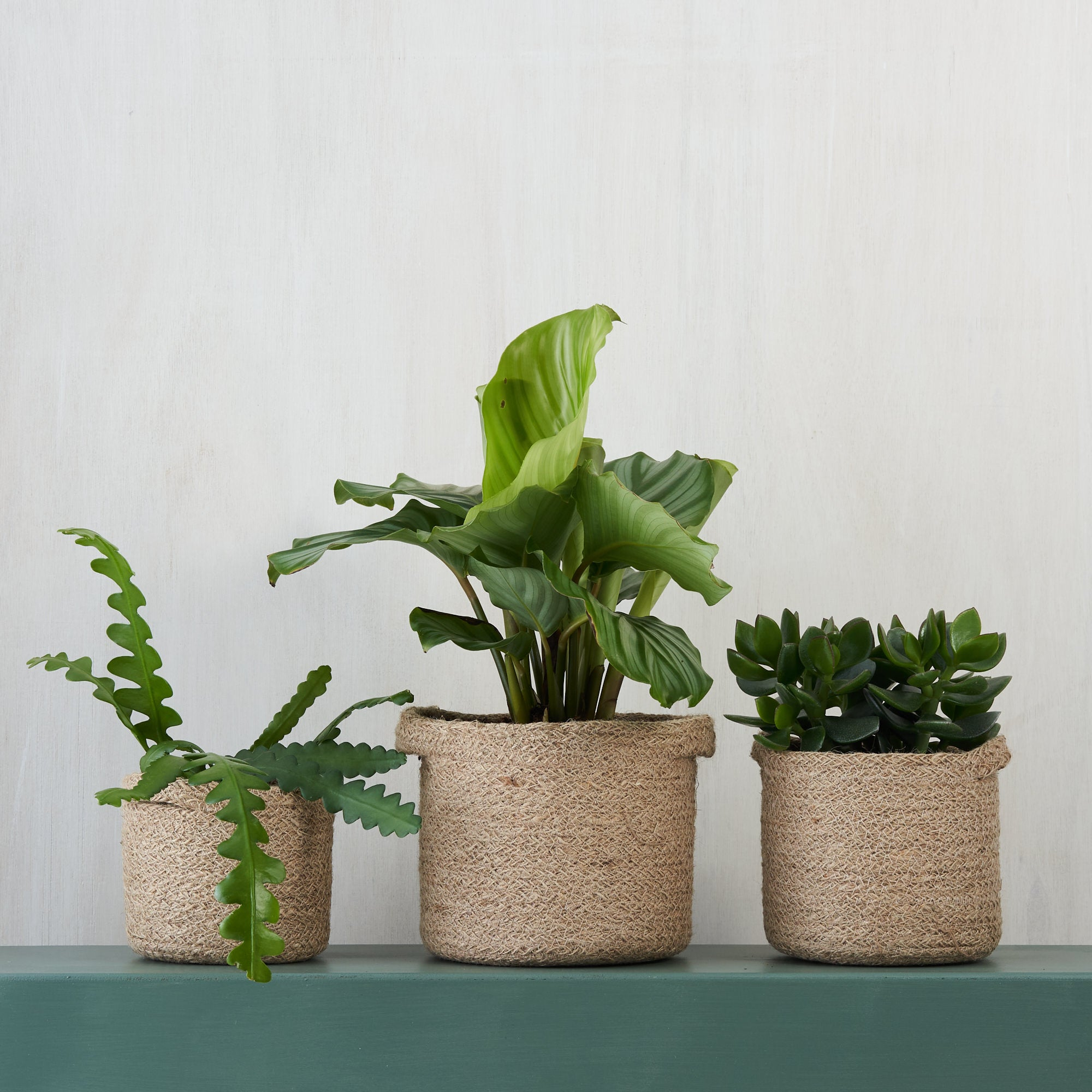 Corporate Houseplant Gifts