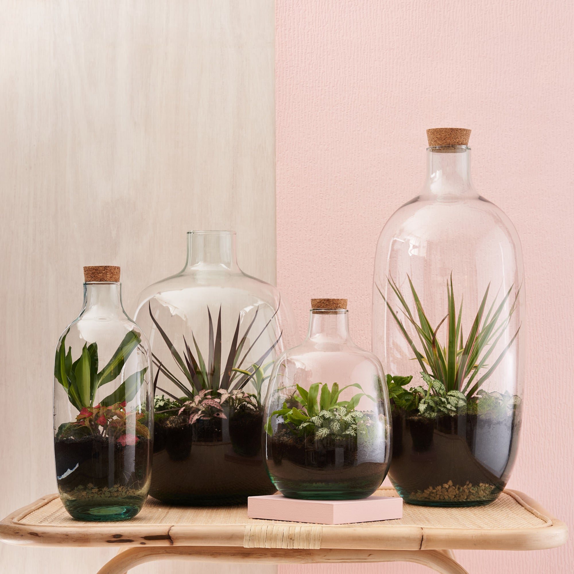 Green & Wild Plant Terrariums