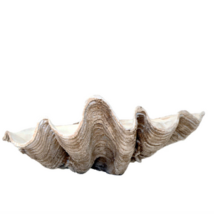 Resin Clam Shell - Maissone