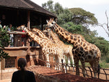 Giraffe Center Tour (3 hrs) - Departs daily at 14:00hrs