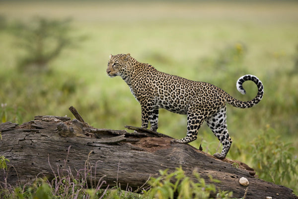 STT004: Amboseli Game Reserve -1½ days