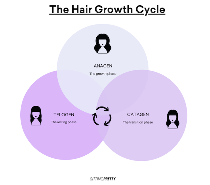 the hair growth cycle; moving through the anagen, catagen and telogen cycles of hair growth.