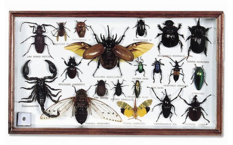 Bugs & Beetles Collection