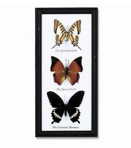 3-Piece Butterfly Collection