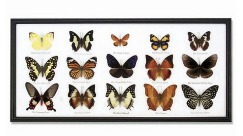 15-Piece Butterfly Collection