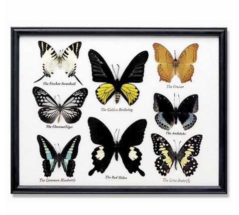 8-Piece Butterfly Collection