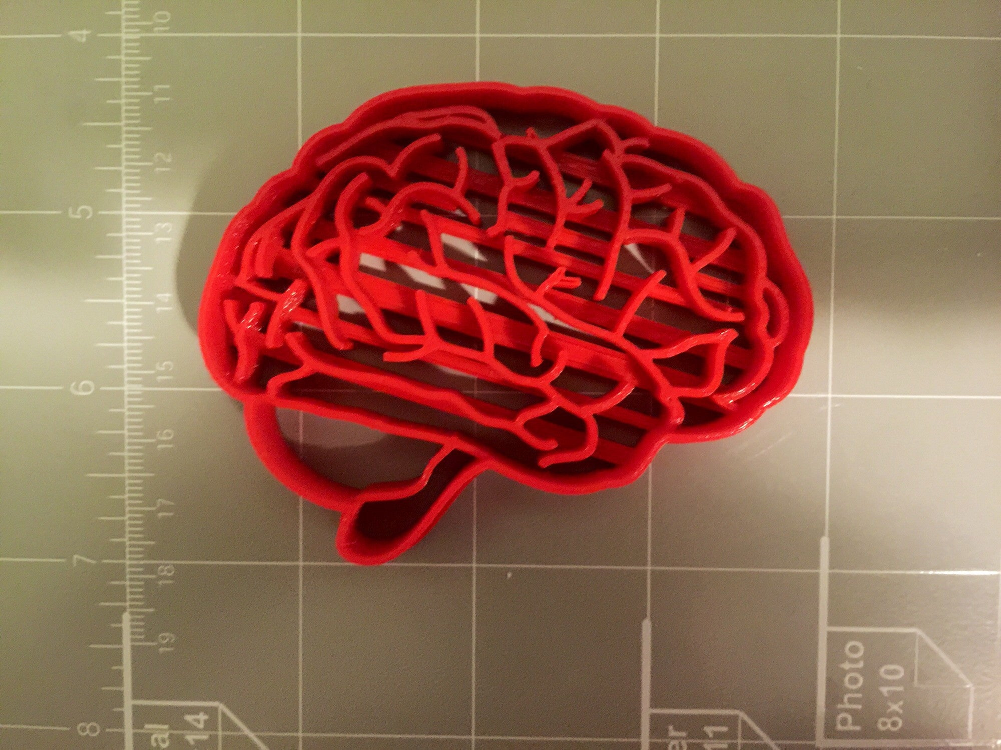 Brain Anatomy Cookie Cutter – Arbi Design - CookieCutz