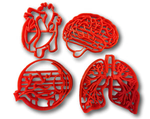 Human Tissue Anatomy Cookie Cutter (Set of 4) - Arbi Design - CookieCutz - 1