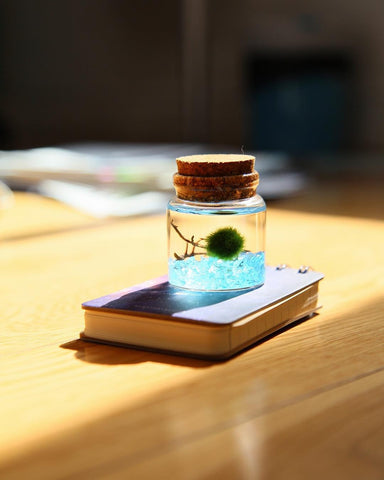 Tiny Marimo Bottle
