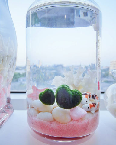 Love Shape Marimo Package
