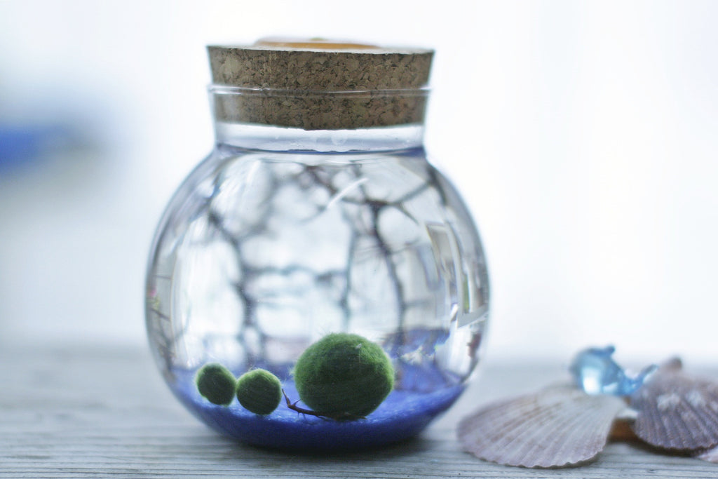 Aquarium/Tank Glass Jar ONLY